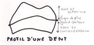 Ligne de plus grand contour d'une dent.
